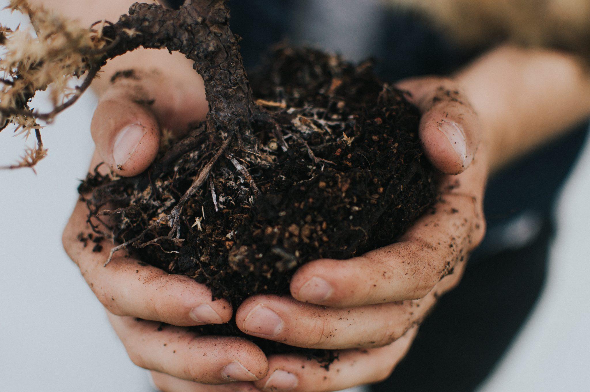 ültetés kertgondozás debrecen