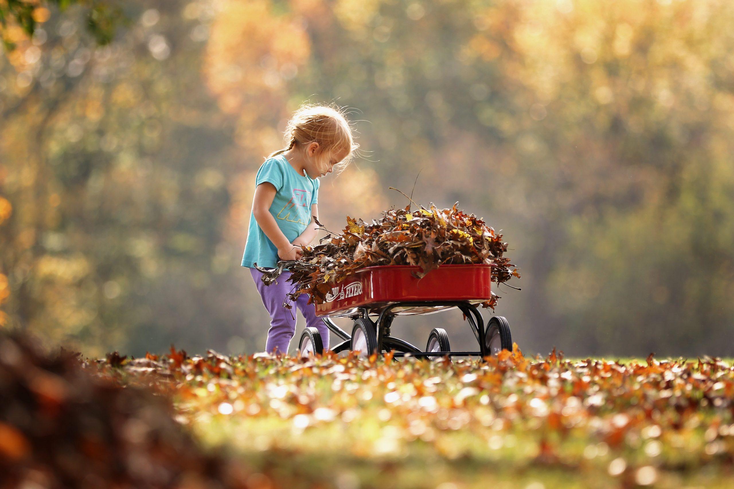 kertgondozás ősz