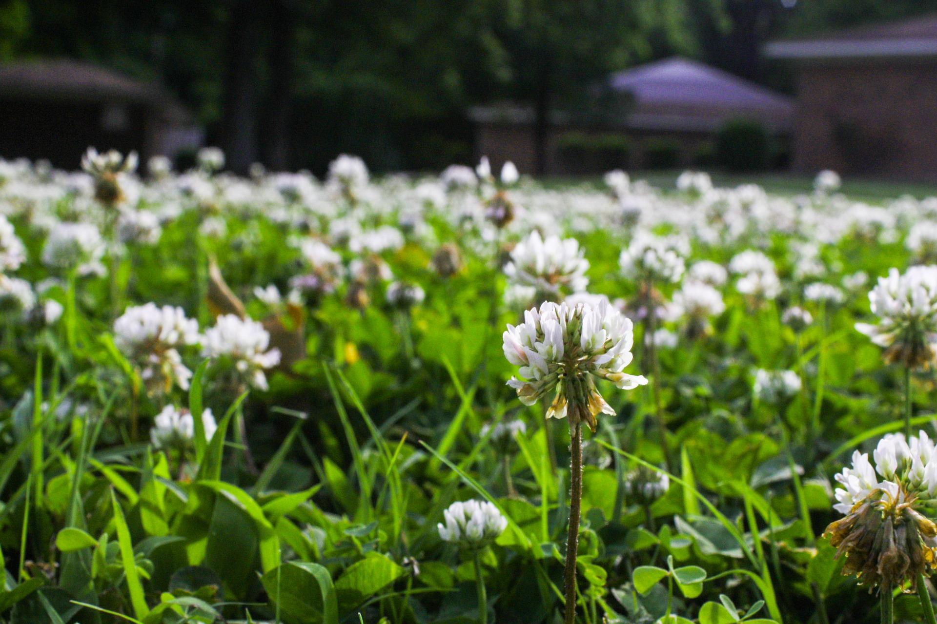 vegyszeres gyomirtás kertgondozás